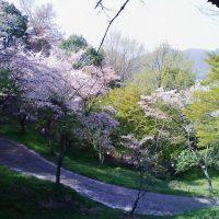 4月上旬 嵐山夜桜